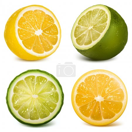 Illustration for Vector citrus fruits lime and lemon. - Royalty Free Image