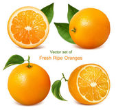 Vector set of fresh ripe oranges with leaves