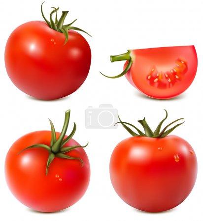 Vector illustration. Tomatoes....