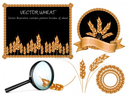 Illustration for Vector wheat ears collection - Royalty Free Image