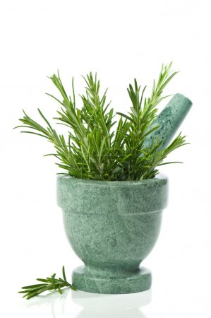 Photo for Fresh rosemary herb in mortar with pestle on white background - Royalty Free Image