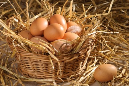 Photo for Clutch of freshly laid eggs in barn setting with straw - Royalty Free Image