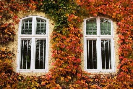 Autumnal foliage