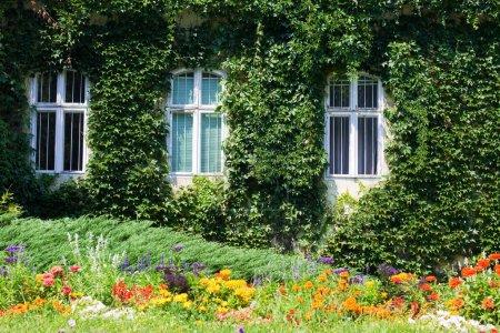 Evergreen foliage on a wall.
