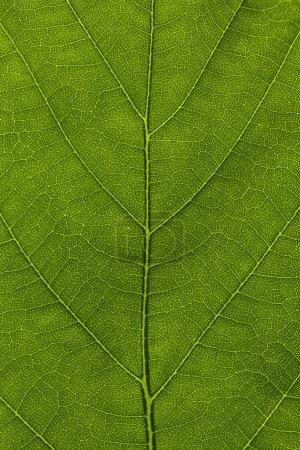 Macro of a leaf