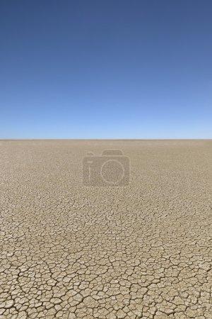 Drought desert