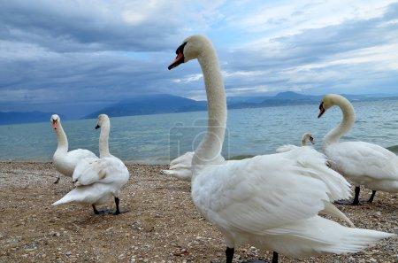 Photo for Italy Garda Lake - Royalty Free Image