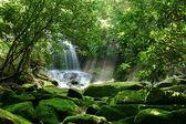 """Постер, картина, фотообои """"Тропический водопад"""""""