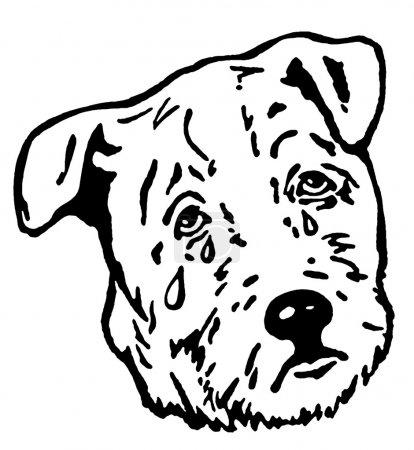 Photo for A black and white version of a sad looking puppy - Royalty Free Image