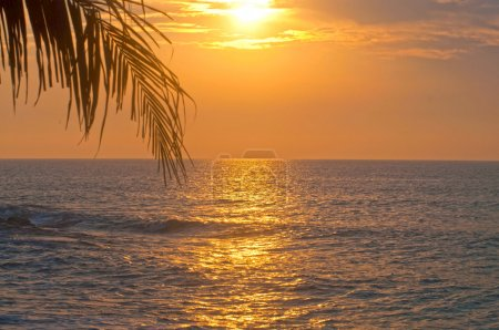 Sunrise over the sea and the palm leaves