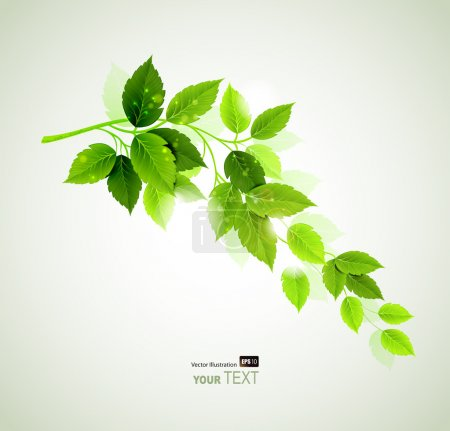 Illustration for Raster version of spring branch with fresh green leaves - Royalty Free Image