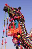 Portrait of decorated camel, Jaisalmer, India