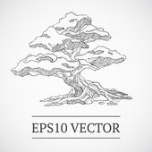 Sketched vintage manga bonsai tree Vector illustration