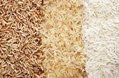 trois rangées de variétés de riz - sauvages, brunes et blanches