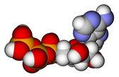 Adenosintrifosfát (Atp) prostor náplň molekulární model