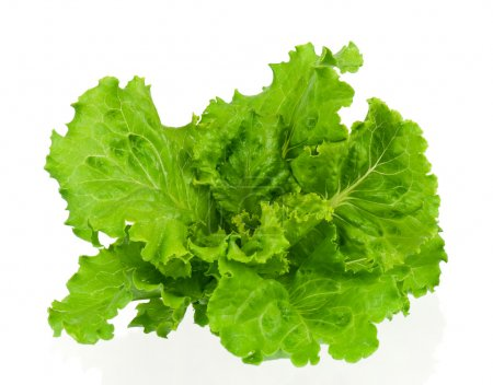 Photo for Fresh green lettuce leaves isolated on white background - Royalty Free Image