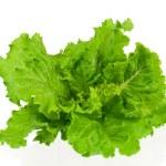 Fresh green lettuce leaves isolated on white backg...