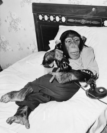 Chimpanzee sitting in bed on the telephone and smoking a cigar