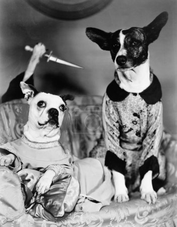 Two dogs sitting on a couch with a dog attaching them from behind with a knife