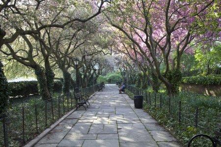 Central Park gardens in spring